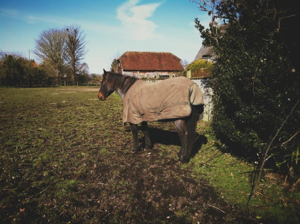 Horse (Path)