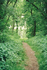 Dirt path in woods